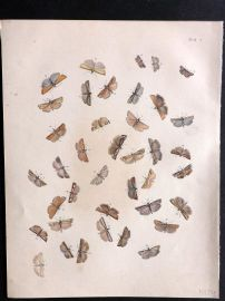 Humphreys & Westwood British Moths 1845 Hand Col Print 116